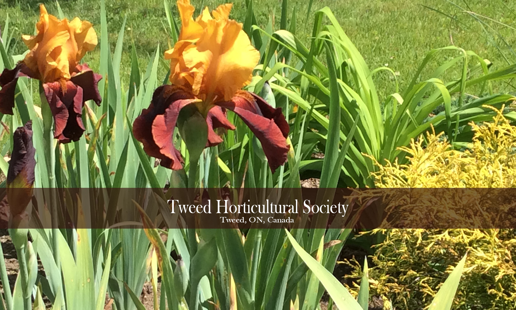 Tweed Horticultural Society